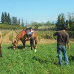 rando vigneronne à cheval
