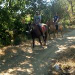 promenade a cheval 1h30