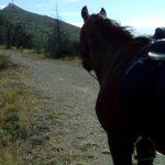rando journée à cheval